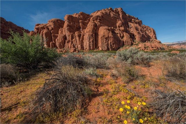 _GNE0404 Snow Canyon Blog